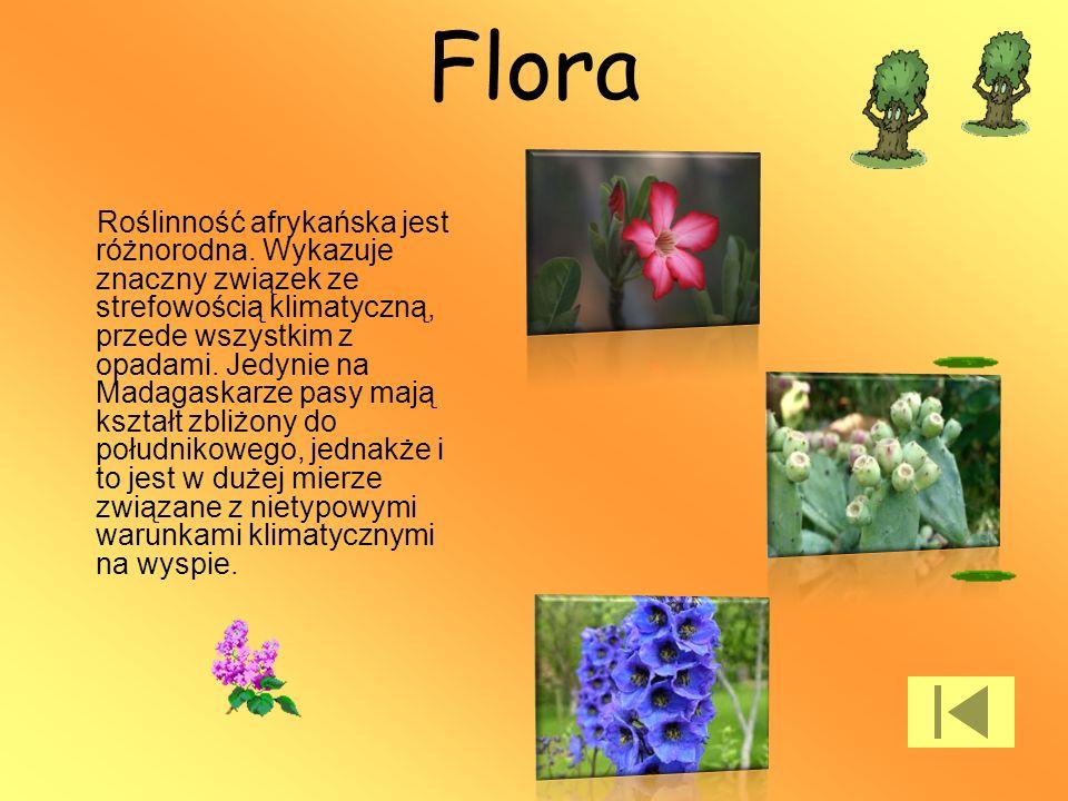 Flora Roślinność afrykańska jest różnorodna. Wykazuje znaczny związek ze strefowością klimatyczną, przede wszystkim z opadami. Jedynie na Madagaskarze