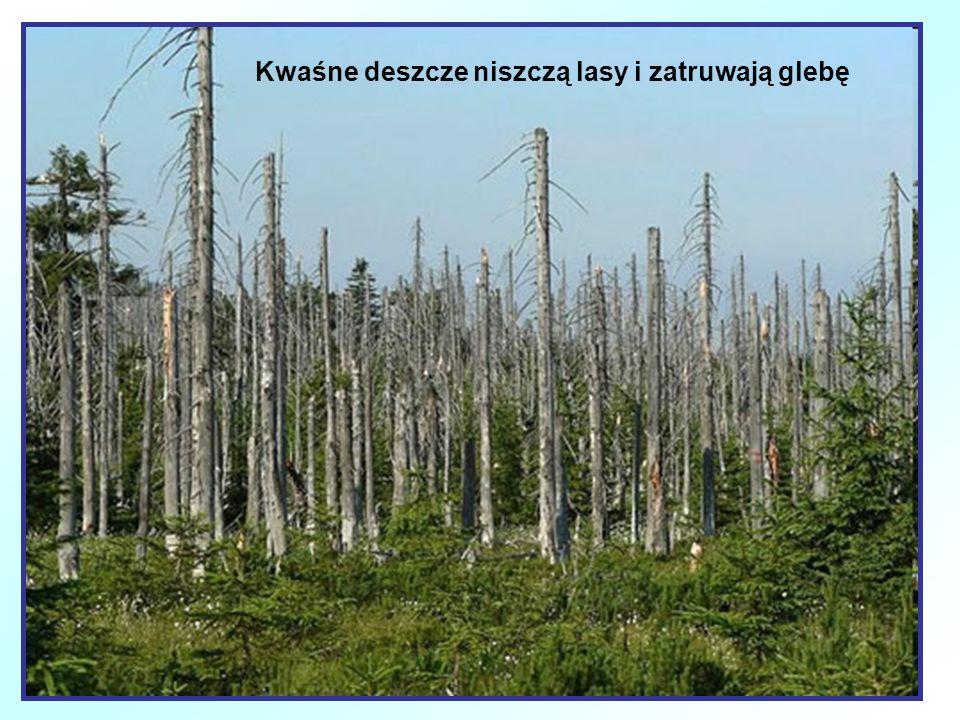 Kwaśne deszcze niszczą lasy i zatruwają glebę