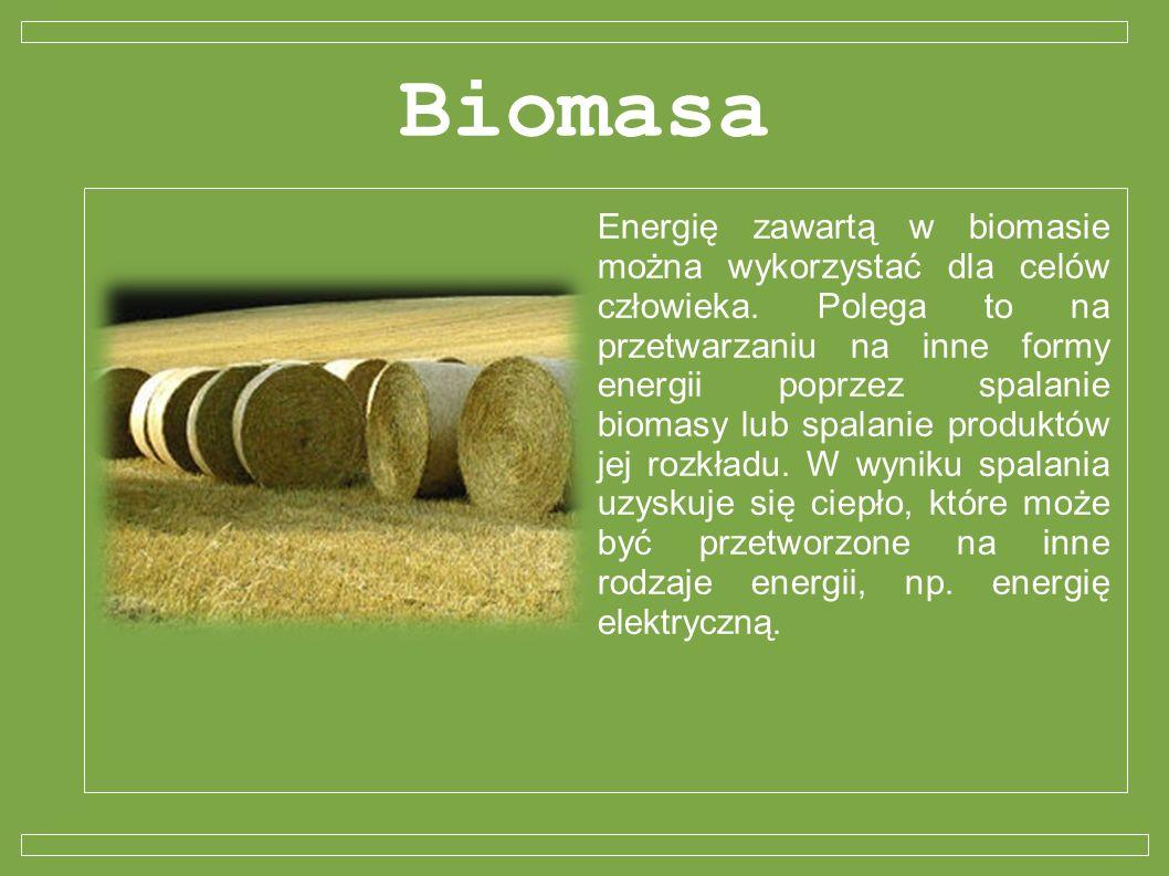 Biomasa Energię zawartą w biomasie można wykorzystać dla celów człowieka. Polega to na przetwarzaniu na inne formy energii poprzez spalanie biomasy lu