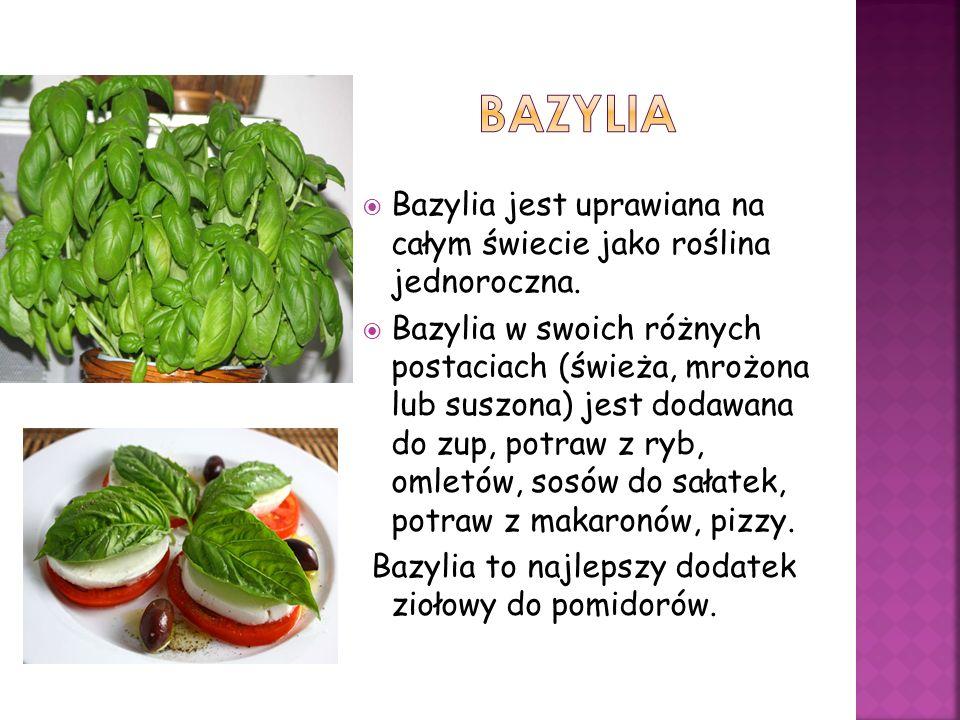 Bazylia jest uprawiana na całym świecie jako roślina jednoroczna. Bazylia w swoich różnych postaciach (świeża, mrożona lub suszona) jest dodawana do z
