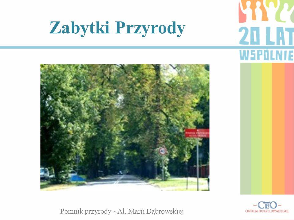 Zabytki Przyrody Pomnik przyrody - Al. Marii Dąbrowskiej