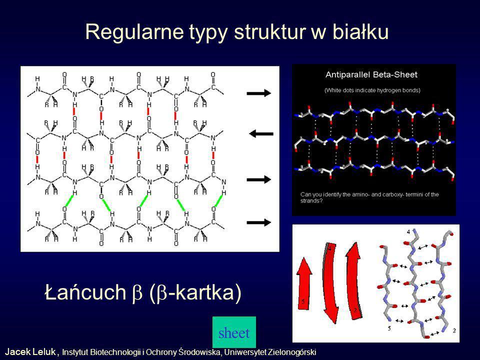 Regularne typy struktur w białku sheet Łańcuch ( -kartka) Jacek Leluk, Instytut Biotechnologii i Ochrony Środowiska, Uniwersytet Zielonogórski