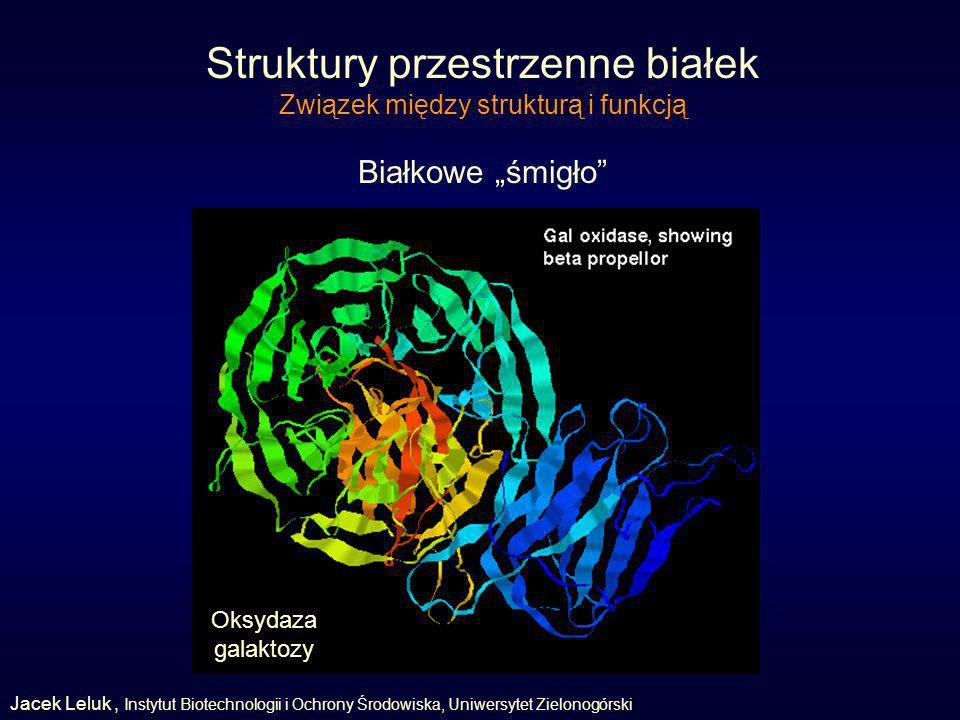 Struktury przestrzenne białek Związek między strukturą i funkcją Białkowe śmigło Oksydaza galaktozy Jacek Leluk, Instytut Biotechnologii i Ochrony Środowiska, Uniwersytet Zielonogórski