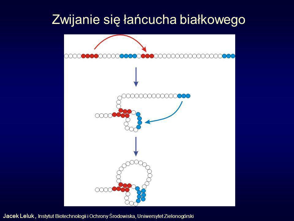 Zwijanie się łańcucha białkowego Jacek Leluk, Instytut Biotechnologii i Ochrony Środowiska, Uniwersytet Zielonogórski