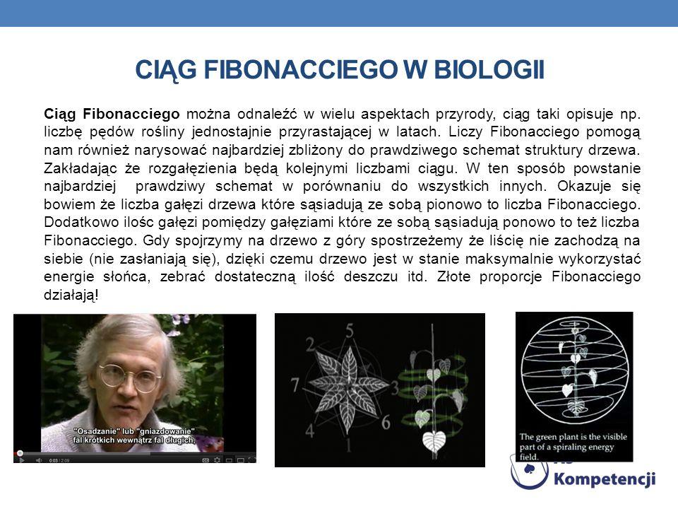CIĄG FIBONACCIEGO W BIOLOGII Ciąg Fibonacciego można odnaleźć w wielu aspektach przyrody, ciąg taki opisuje np. liczbę pędów rośliny jednostajnie przy