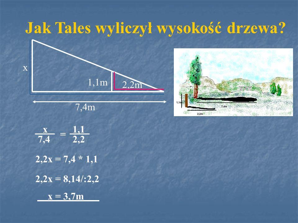 7,4m 2,2m 1,1m x Jak Tales wyliczył wysokość drzewa? 2,2x = 7,4 * 1,1 2,2x = 8,14/:2,2 x = 3,7m x 7,4 1,1 2,2 =