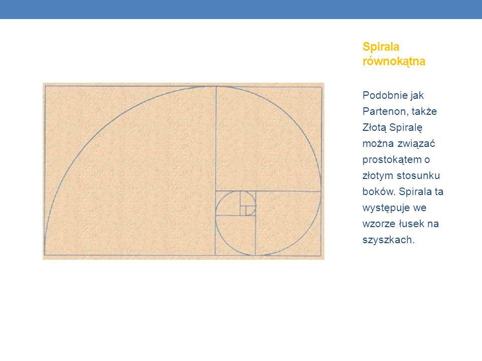 Podobnie jak Partenon, także Złotą Spiralę można związać prostokątem o złotym stosunku boków. Spirala ta występuje we wzorze łusek na szyszkach. Spira