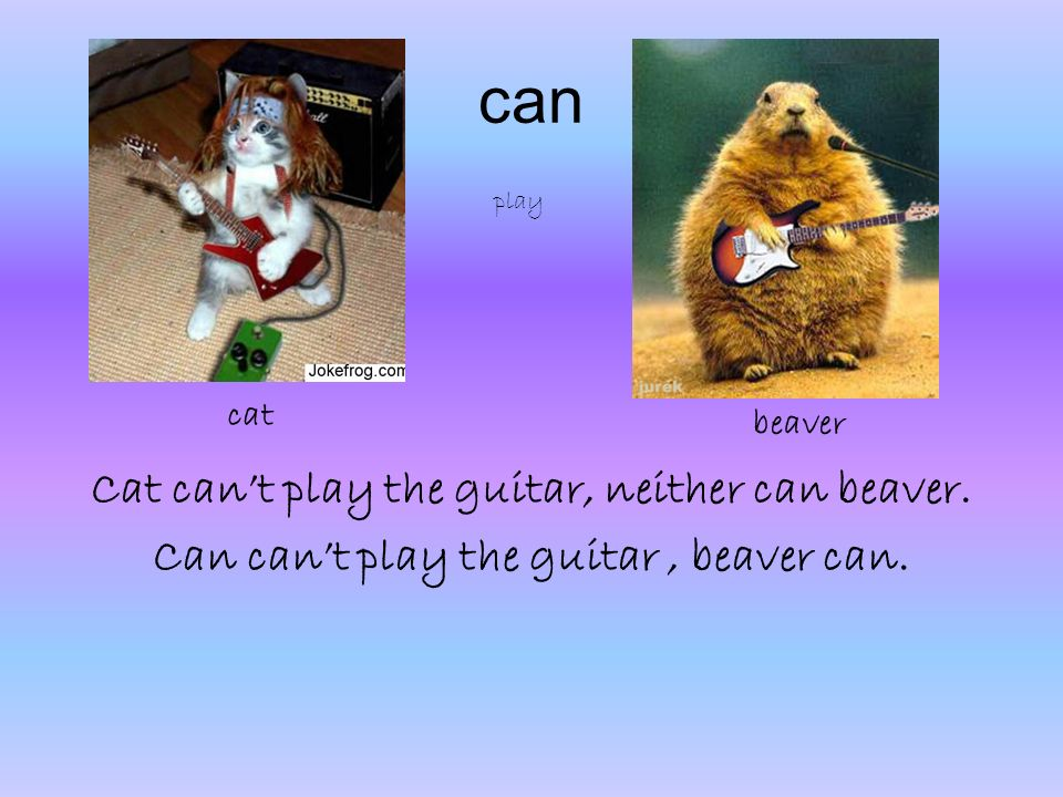 can Cat cant play the guitar, neither can beaver. Can cant play the guitar, beaver can.