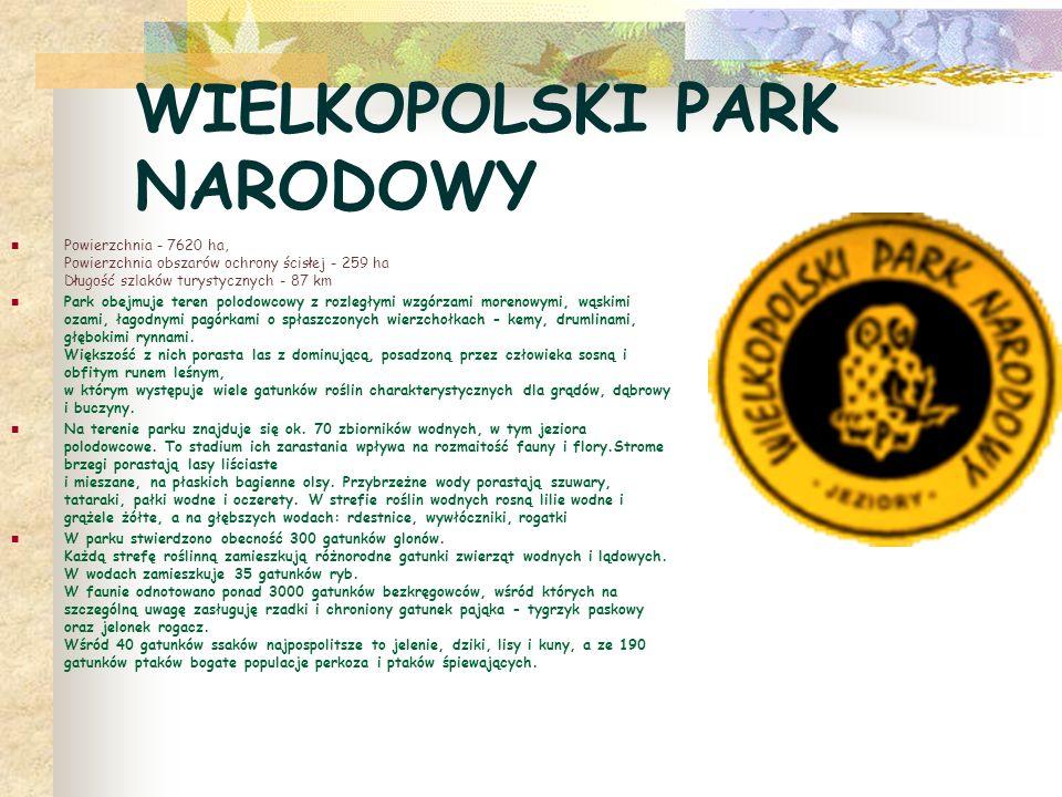 WIELKOPOLSKI PARK NARODOWY Powierzchnia - 7620 ha, Powierzchnia obszarów ochrony ścisłej - 259 ha Długość szlaków turystycznych - 87 km Park obejmuje teren polodowcowy z rozległymi wzgórzami morenowymi, wąskimi ozami, łagodnymi pagórkami o spłaszczonych wierzchołkach - kemy, drumlinami, głębokimi rynnami.