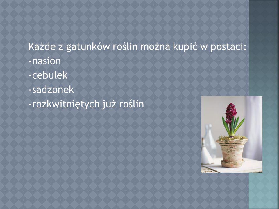 Każde z gatunków roślin można kupić w postaci: -nasion -cebulek -sadzonek -rozkwitniętych już roślin