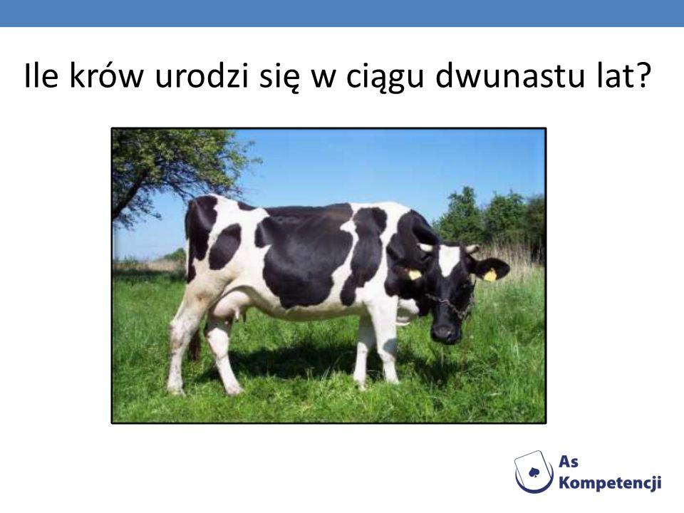 Ile krów urodzi się w ciągu dwunastu lat?