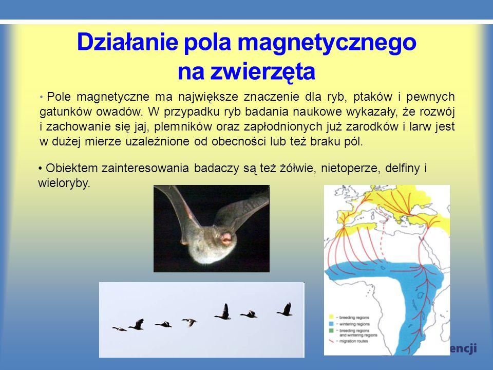 Działanie pola magnetycznego na zwierzęta Pole magnetyczne ma największe znaczenie dla ryb, ptaków i pewnych gatunków owadów. W przypadku ryb badania