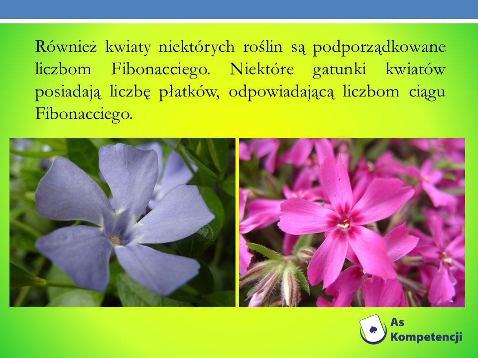 Również kwiaty niektórych roślin są podporządkowane liczbom Fibonacciego. Niektóre gatunki kwiatów posiadają liczbę płatków, odpowiadającą liczbom cią
