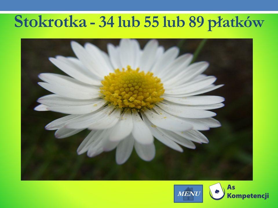 Stokrotka - 34 lub 55 lub 89 płatków MENU