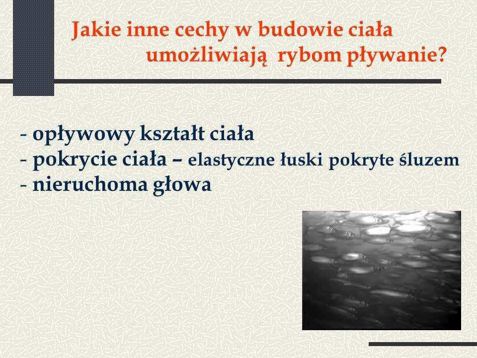 Jakie inne cechy w budowie ciała umożliwiają rybom pływanie? - opływowy kształt ciała - pokrycie ciała – elastyczne łuski pokryte śluzem - nieruchoma