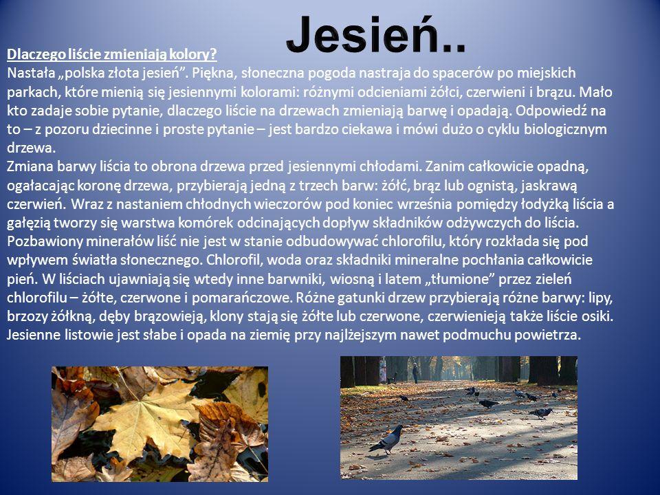 Dlaczego liście zmieniają kolory? Nastała polska złota jesień. Piękna, słoneczna pogoda nastraja do spacerów po miejskich parkach, które mienią się je
