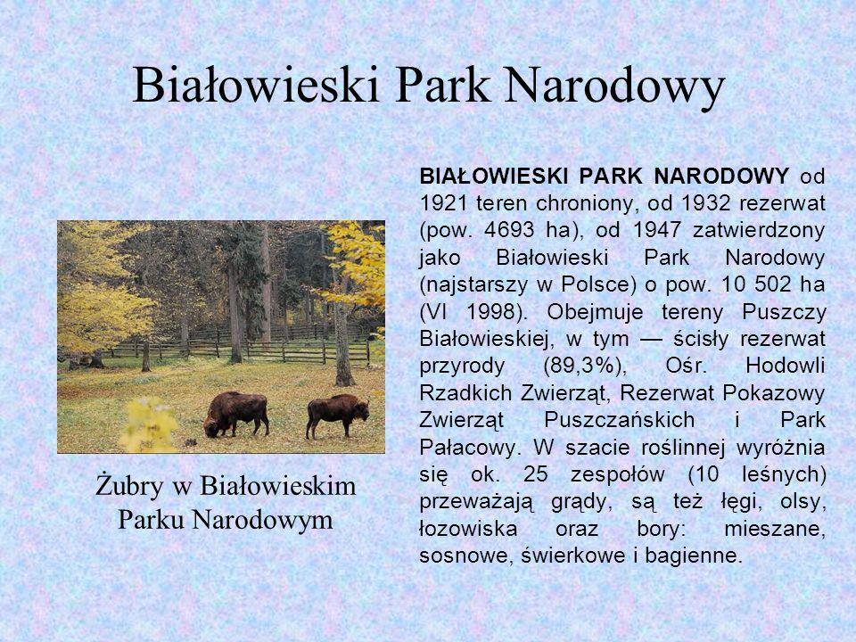 Białowieski Park Narodowy BIAŁOWIESKI PARK NARODOWY od 1921 teren chroniony, od 1932 rezerwat (pow.