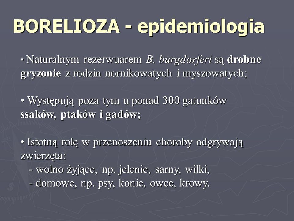 BORELIOZA - epidemiologia Naturalnym rezerwuarem B. burgdorferi są drobne gryzonie z rodzin nornikowatych i myszowatych; Naturalnym rezerwuarem B. bur