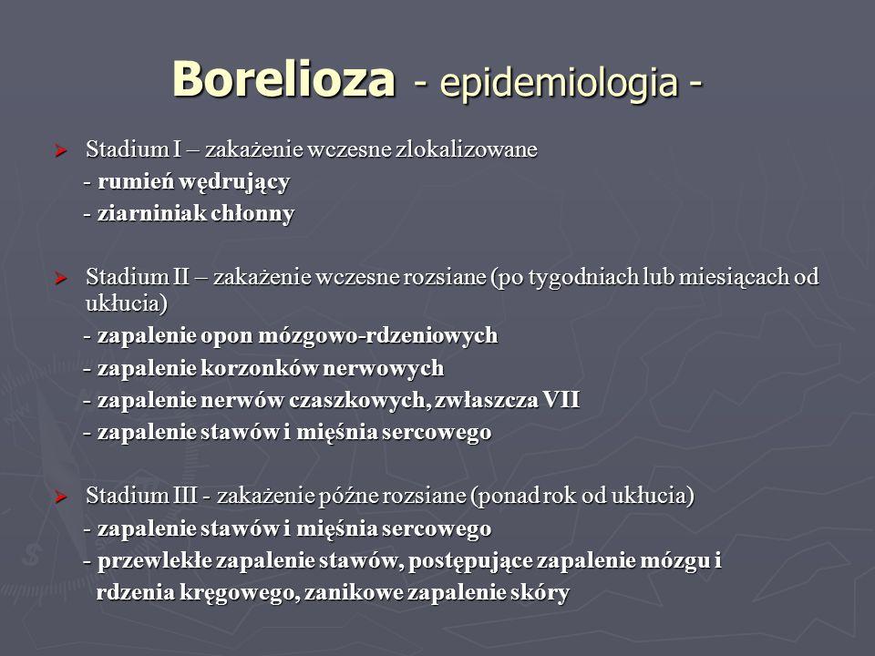 Borelioza - epidemiologia - Stadium I – zakażenie wczesne zlokalizowane Stadium I – zakażenie wczesne zlokalizowane - rumień wędrujący - rumień wędruj
