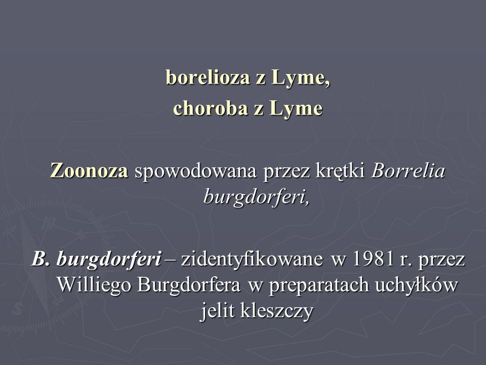 borelioza z Lyme, choroba z Lyme Zoonoza spowodowana przez krętki Borrelia burgdorferi, B. burgdorferi – zidentyfikowane w 1981 r. przez Williego Burg