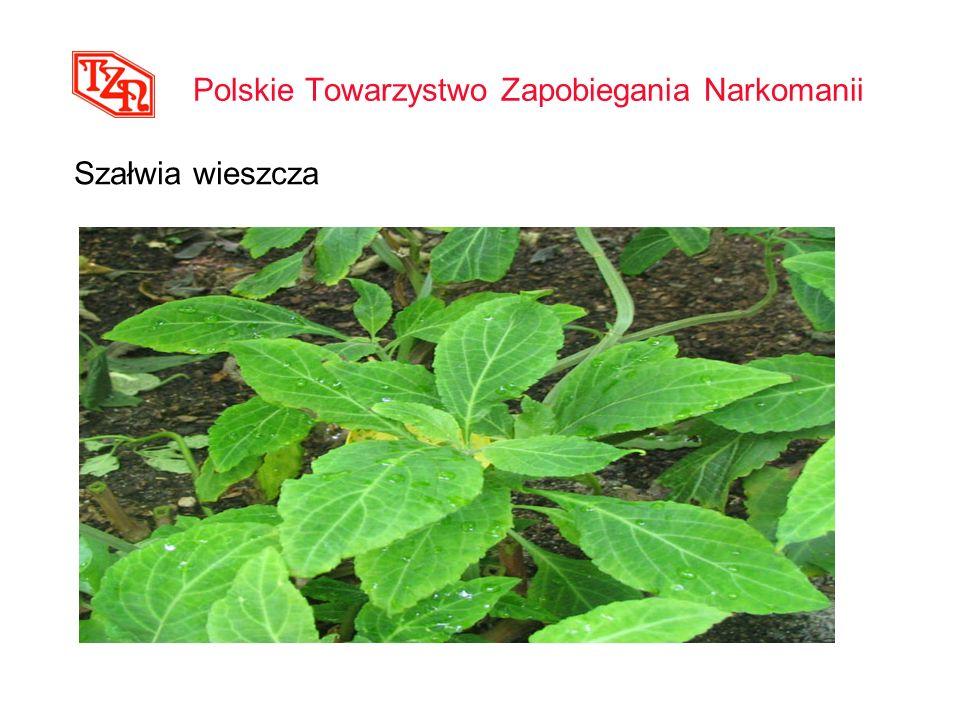 Polskie Towarzystwo Zapobiegania Narkomanii Szałwia wieszcza