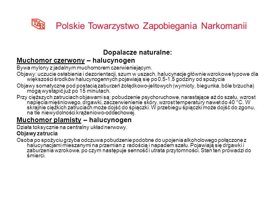 Dopalacze naturalne: Muchomor czerwony – halucynogen Bywa mylony z jadalnym muchomorem czerwieniejącym. Objawy: uczucie osłabienia i dezorientacji, sz