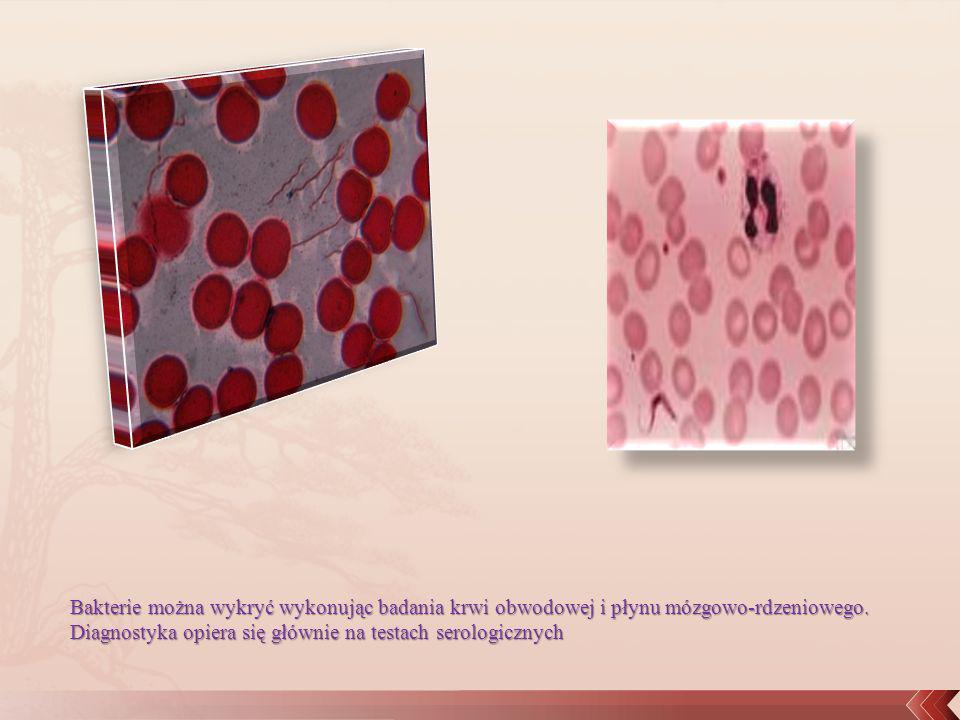 Bakterie można wykryć wykonując badania krwi obwodowej i płynu mózgowo-rdzeniowego. Diagnostyka opiera się głównie na testach serologicznych