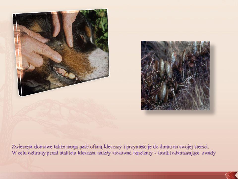 Zwierzęta domowe także mogą paść ofiarą kleszczy i przynieść je do domu na swojej sierści. W celu ochrony przed atakiem kleszcza należy stosować repel