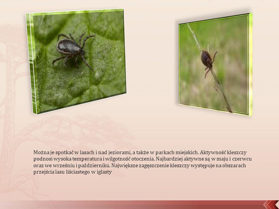 Można je spotkać w lasach i nad jeziorami, a także w parkach miejskich. Aktywność kleszczy podnosi wysoka temperatura i wilgotność otoczenia. Najbardz