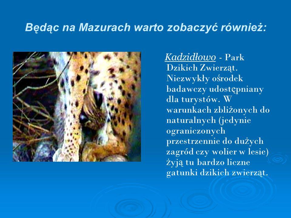 Będąc na Mazurach warto zobaczyć również: Kadzidłowo - Park Dzikich Zwierz ą t. Niezwykły o ś rodek badawczy udost ę pniany dla turystów. W warunkach