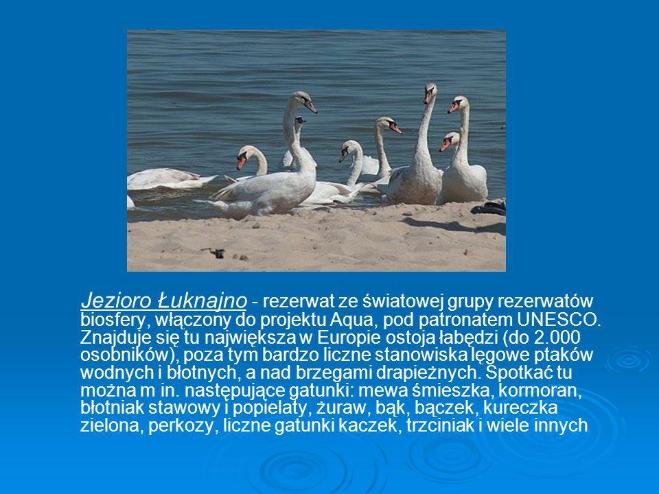 Jezioro Łuknajno - rezerwat ze światowej grupy rezerwatów biosfery, włączony do projektu Aqua, pod patronatem UNESCO. Znajduje się tu największa w Eur