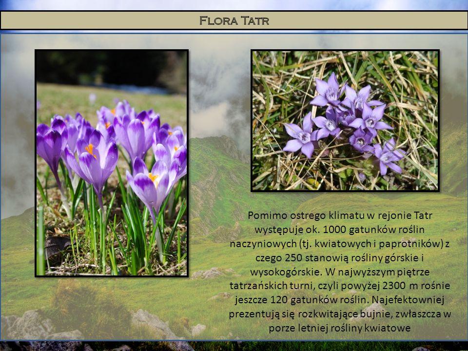Pomimo ostrego klimatu w rejonie Tatr występuje ok. 1000 gatunków roślin naczyniowych (tj. kwiatowych i paprotników) z czego 250 stanowią rośliny górs