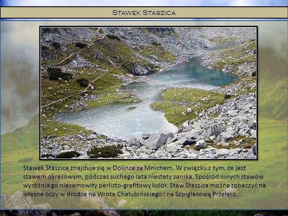Stawek Staszica Stawek Staszica znajduje się w Dolince za Mnichem. W związku z tym, że jest stawem okresowym, podczas suchego lata niestety zanika. Sp