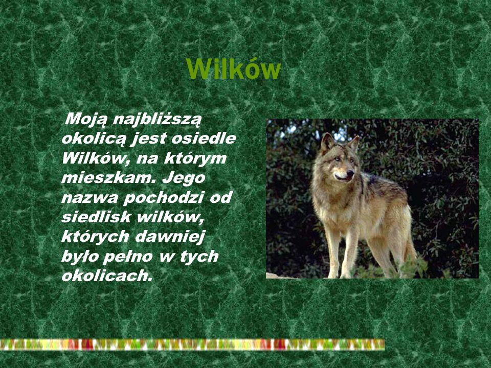 Wilków Moją najbliższą okolicą jest osiedle Wilków, na którym mieszkam.