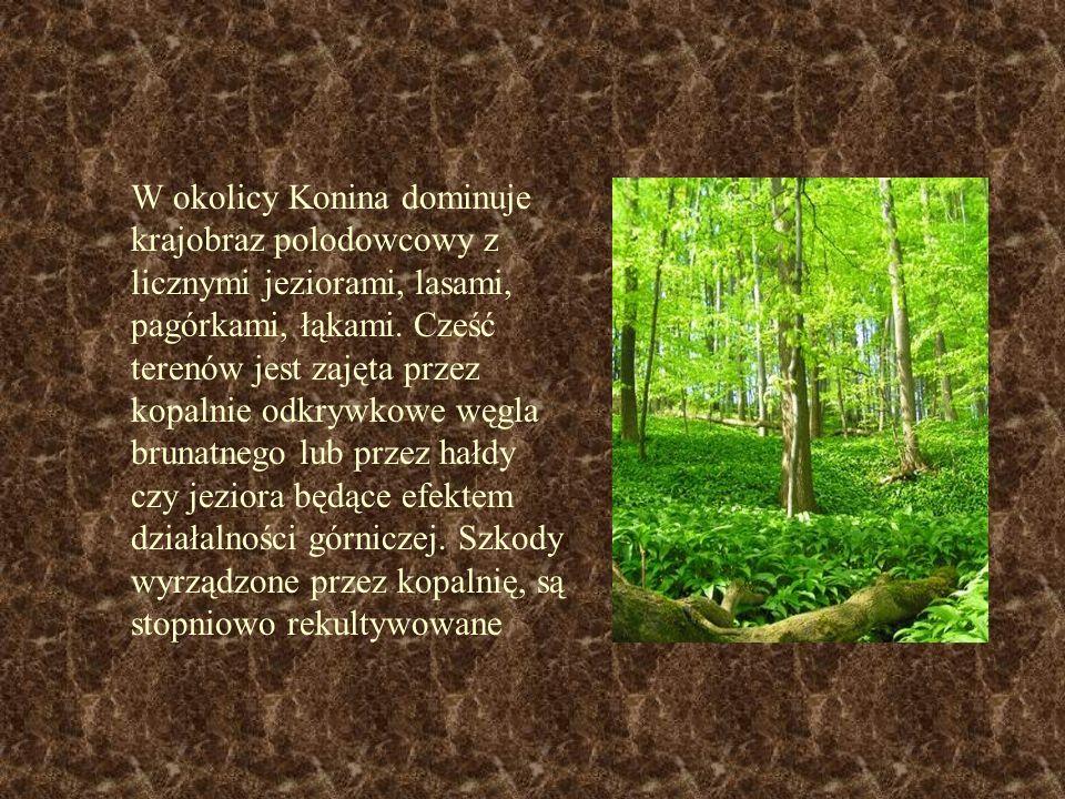 W okolicy Konina dominuje krajobraz polodowcowy z licznymi jeziorami, lasami, pagórkami, łąkami. Cześć terenów jest zajęta przez kopalnie odkrywkowe w