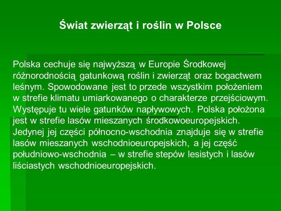 Świat zwierząt i roślin w Polsce Polska cechuje się najwyższą w Europie Środkowej różnorodnością gatunkową roślin i zwierząt oraz bogactwem leśnym. Sp
