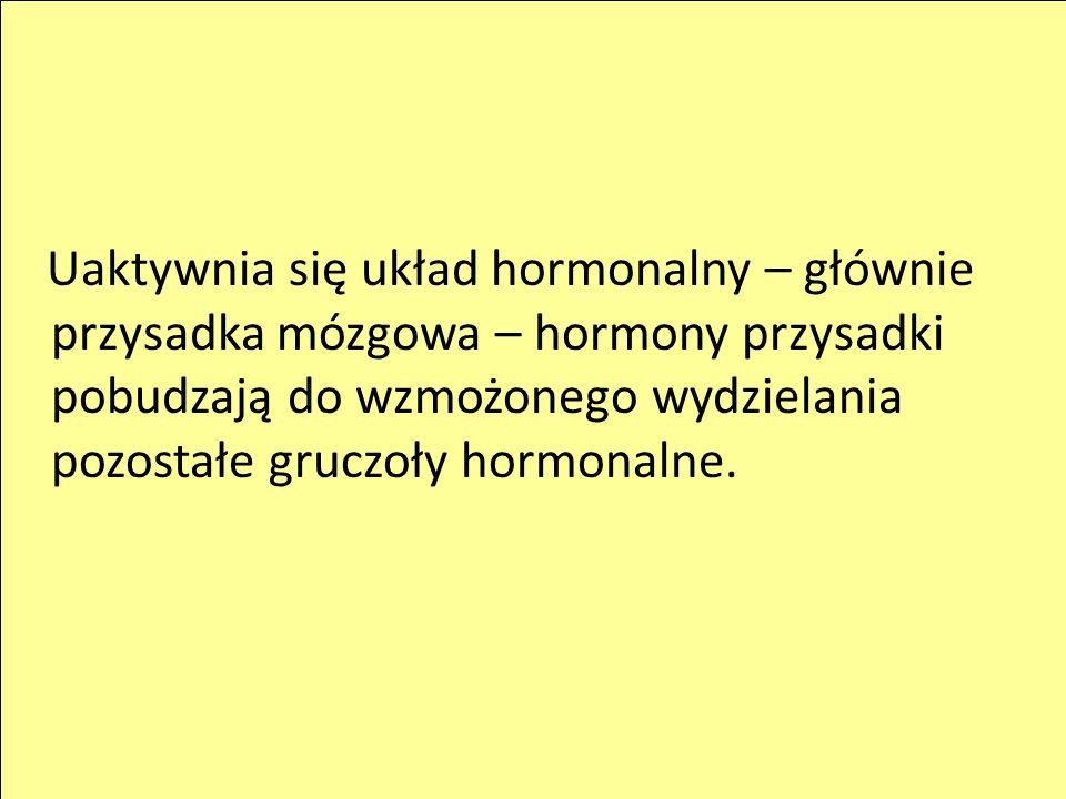 Uaktywnia się układ hormonalny – głównie przysadka mózgowa – hormony przysadki pobudzają do wzmożonego wydzielania pozostałe gruczoły hormonalne.