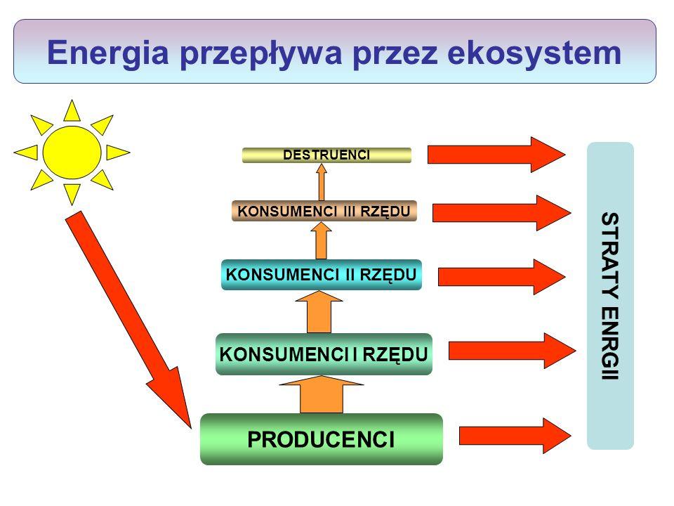 Piramida biomasy ekosystemu trawiastego Wyjaśnij, dlaczego przepływ energii między różnymi poziomami troficznymi wiąże się zawsze z jej stratami.
