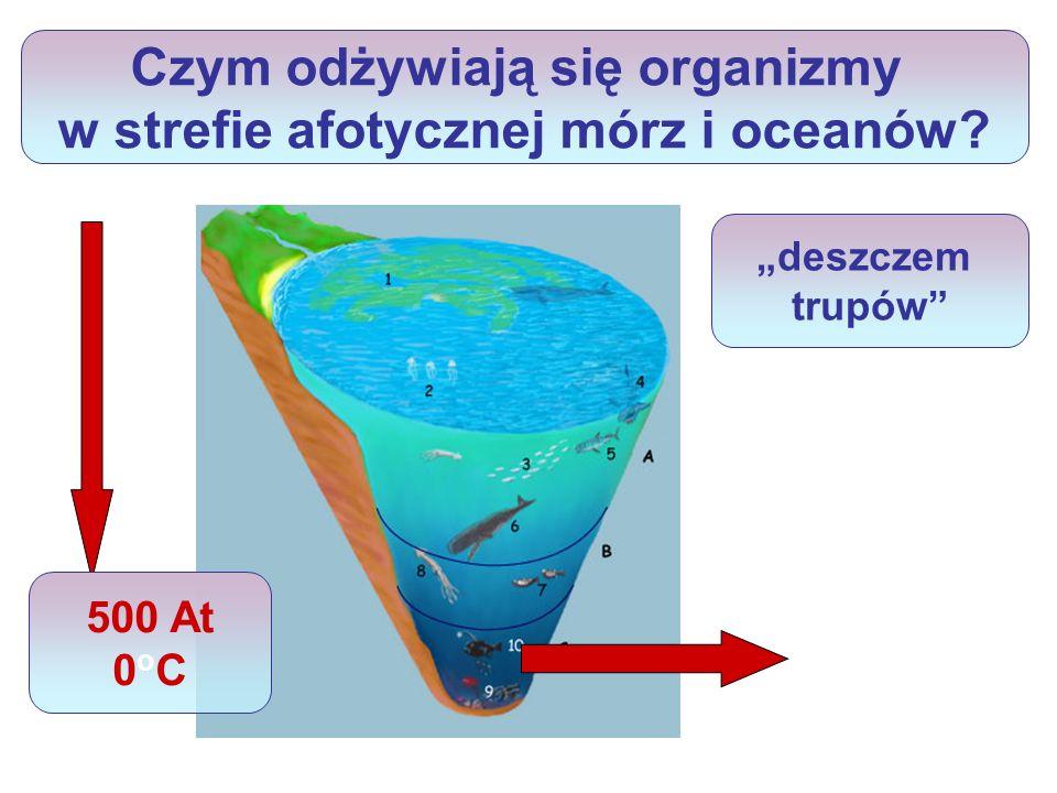 Doliny i oazy ryftowe Gigantyczne pęknięcia, które opasują kulę ziemską na dnie oceanów.