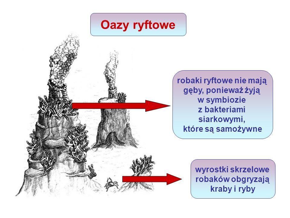 Źródła http://www.meeritu.isu.pl http://archiwum.wiz.pl/2001/01124000.asp http://pl.wikipedia.org/w/index.php?title=Plik:Oddychanie_kom%C3%B3rkowe.s vg&filetimestamp=20061026122525http://pl.wikipedia.org/w/index.php?title=Plik:Oddychanie_kom%C3%B3rkowe.s vg&filetimestamp=20061026122525 http://www.wiw.pl/Biologia/Ekologia/ZiemiaZycie/Esej.asp?base=r&cp=3&ce=0