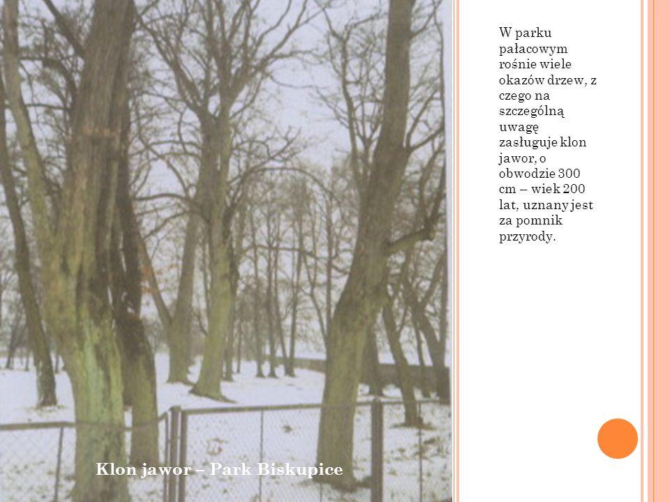 W parku pałacowym rośnie wiele okazów drzew, z czego na szczególną uwagę zasługuje klon jawor, o obwodzie 300 cm – wiek 200 lat, uznany jest za pomnik