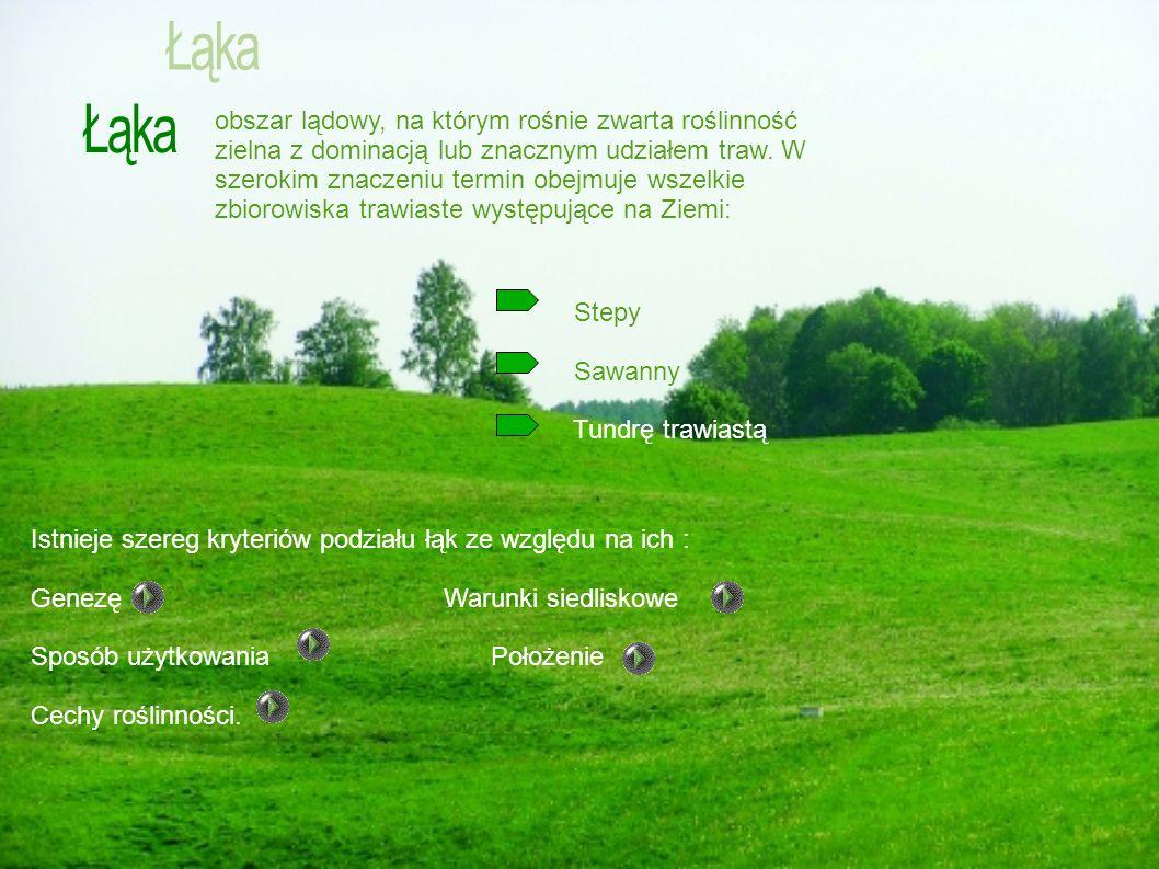 obszar lądowy, na którym rośnie zwarta roślinność zielna z dominacją lub znacznym udziałem traw. W szerokim znaczeniu termin obejmuje wszelkie zbiorow