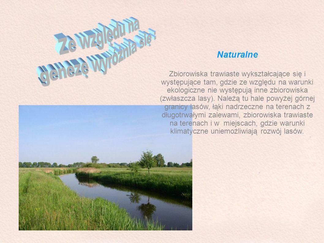 Naturalne Zbiorowiska trawiaste wykształcające się i występujące tam, gdzie ze względu na warunki ekologiczne nie występują inne zbiorowiska (zwłaszcz
