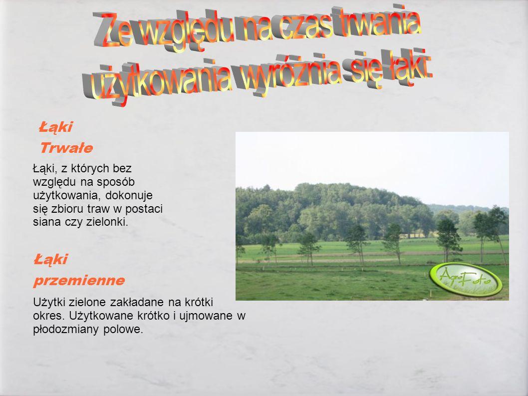 Łąki, z których bez względu na sposób użytkowania, dokonuje się zbioru traw w postaci siana czy zielonki. Użytki zielone zakładane na krótki okres. Uż