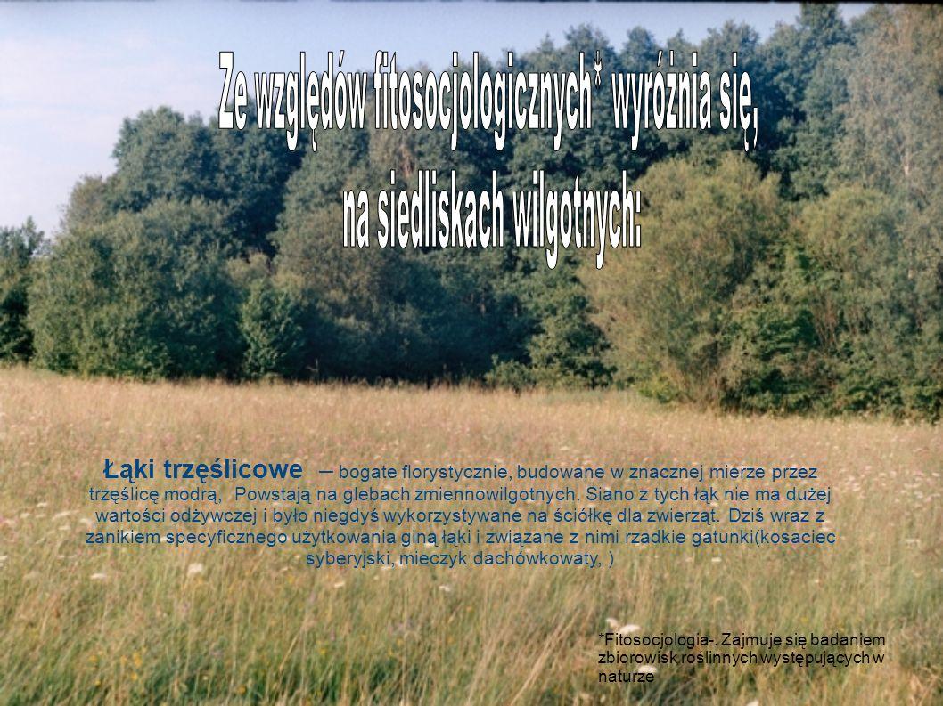 Łąki trzęślicowe – bogate florystycznie, budowane w znacznej mierze przez trzęślicę modrą, Powstają na glebach zmiennowilgotnych. Siano z tych łąk nie