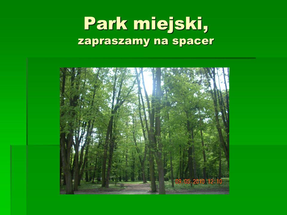 Park miejski, zapraszamy na spacer