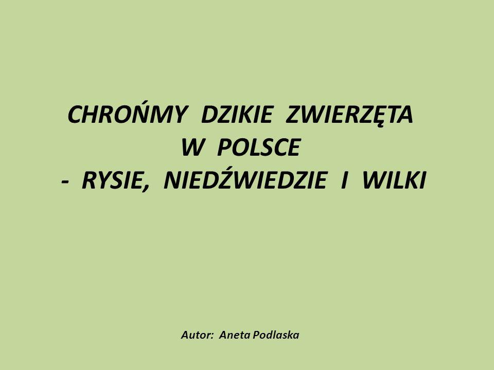 Tylko nieliczne regiony Polski mogą się pochwalić obecnością dużych drapieżników.