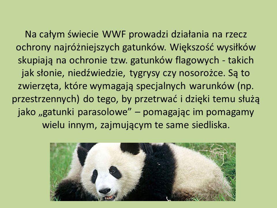 Na całym świecie WWF prowadzi działania na rzecz ochrony najróżniejszych gatunków. Większość wysiłków skupiają na ochronie tzw. gatunków flagowych - t
