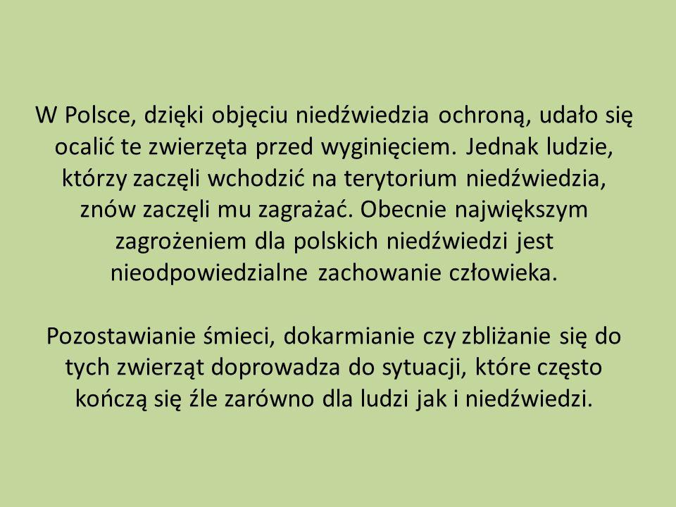 W Polsce, dzięki objęciu niedźwiedzia ochroną, udało się ocalić te zwierzęta przed wyginięciem. Jednak ludzie, którzy zaczęli wchodzić na terytorium n