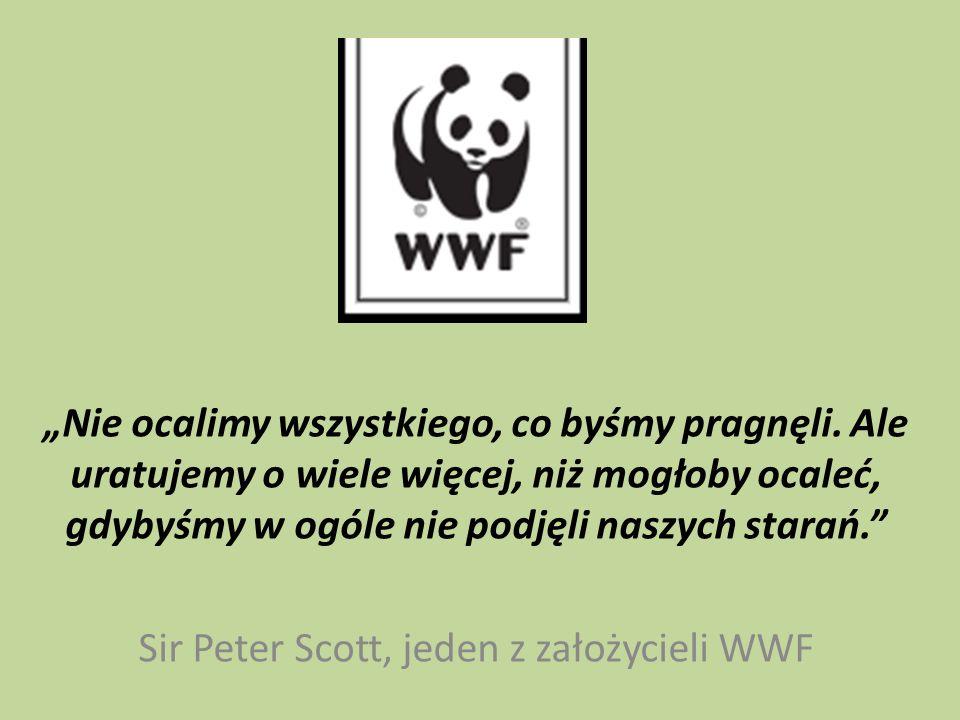 Co to jest WWF.